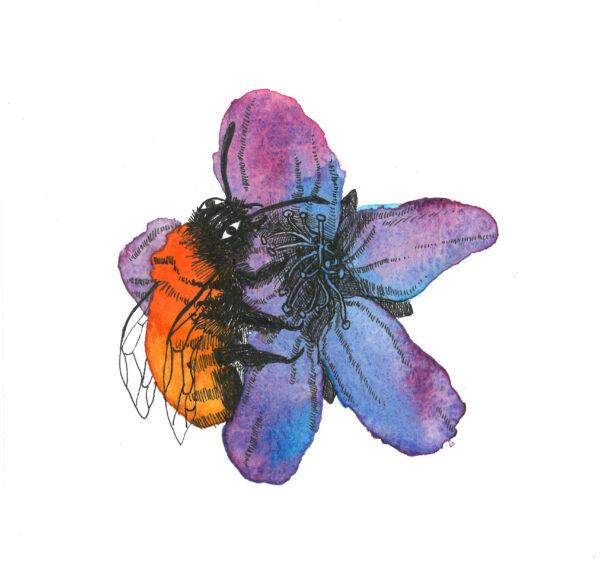 British Bumble Bee