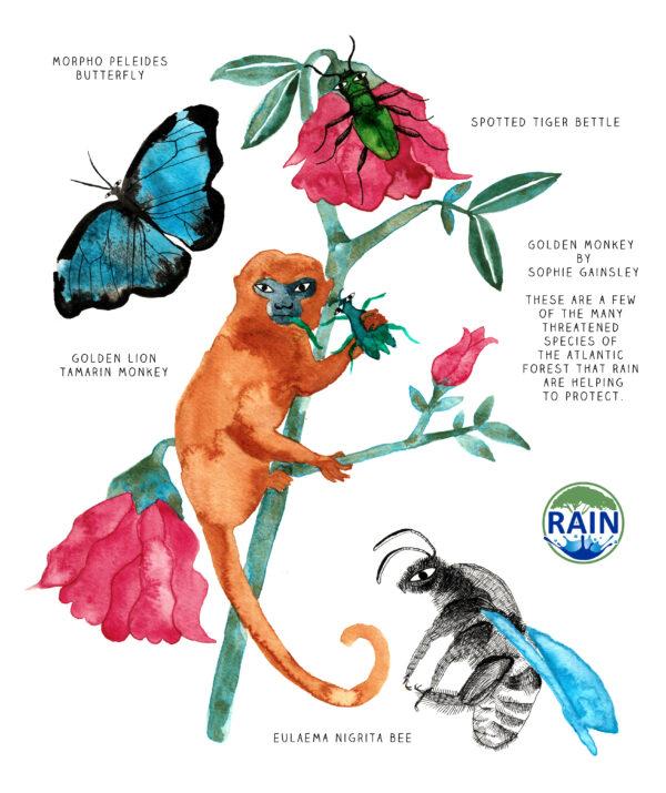 Golden Monkey from the Atlantic Forest, artwork for Rain Reforestation charity