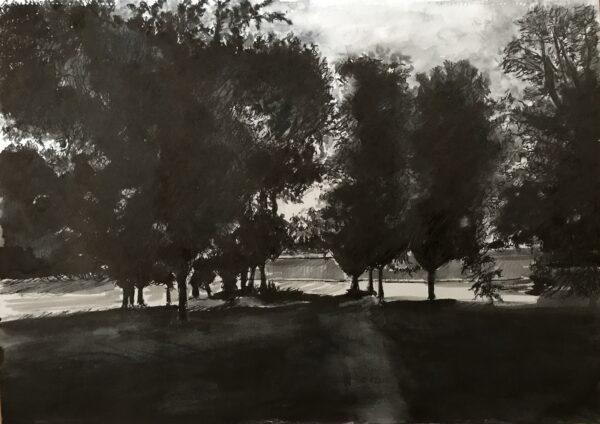 Clapham Common Trees