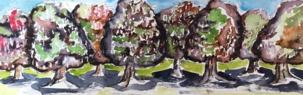 Horse Chestnut Trees, Clapham Common