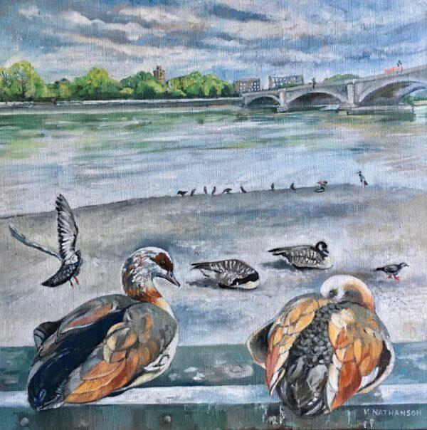 Egyptian Geese under Putney Bridge