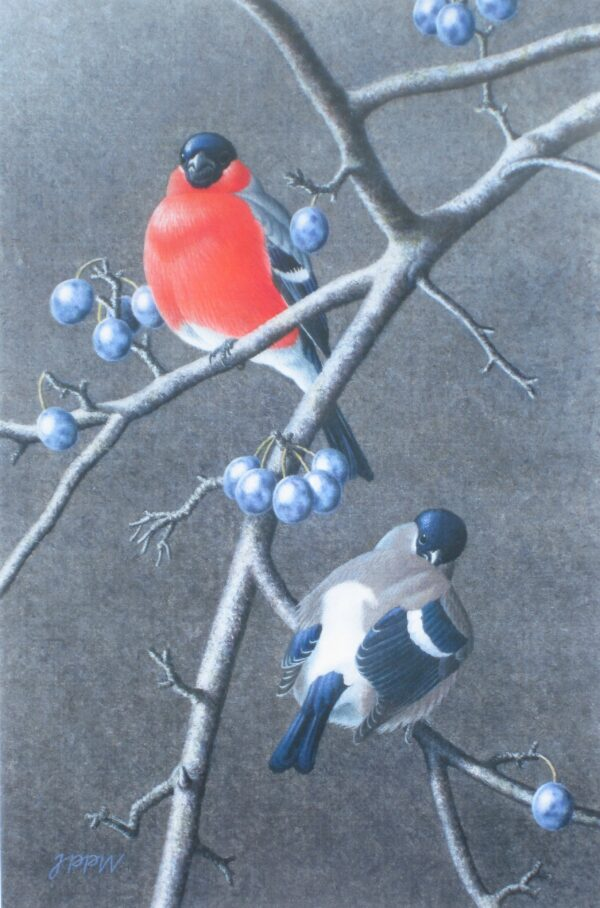 Bullfinch pair and Sloes