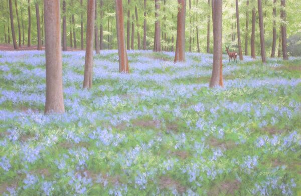 Roe Deer and Bluebells