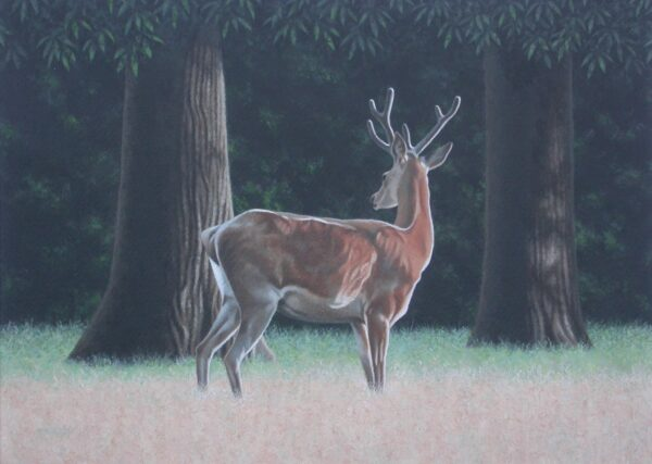 Young Stag by a Wood of Sweet Chestnuts