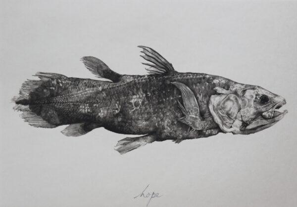 HOPE (coelacanth)